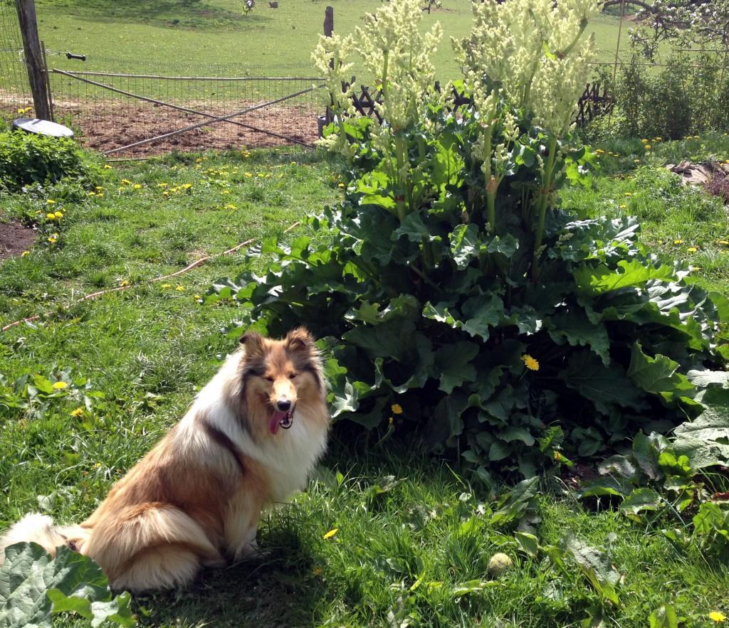 Onze hond Mila
