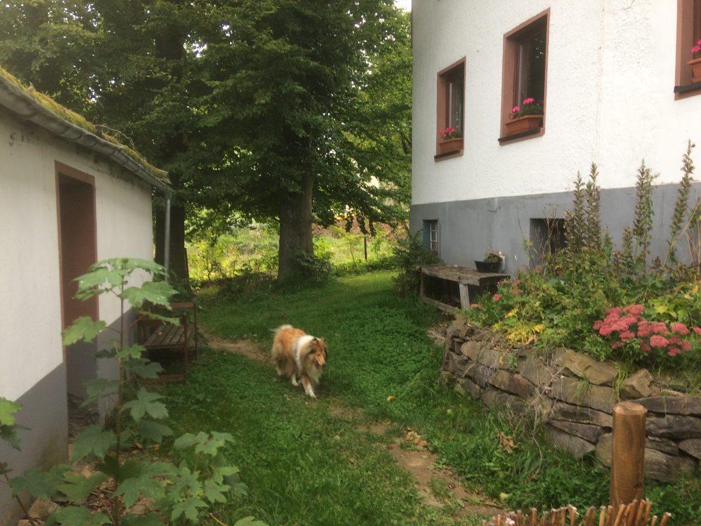Omheinde tuin Eifelhof hondvriendelijk