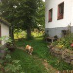 Omheinde tuin Eifelhof