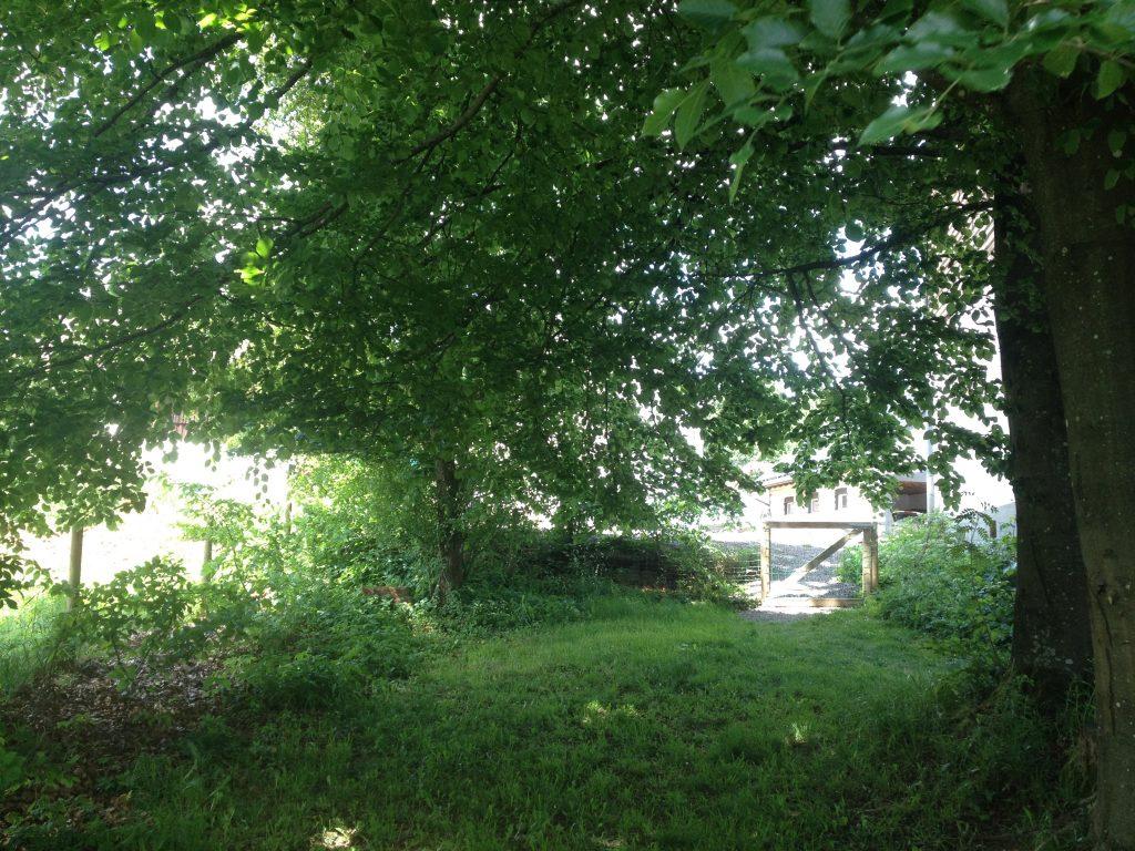 Vakantiehuis geschikt voor honden met omheinde tuin
